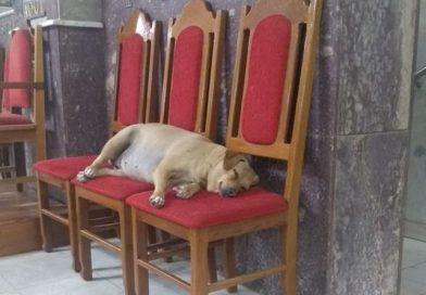 Foto fofa de cadela viraliza em Lagoa da Prata